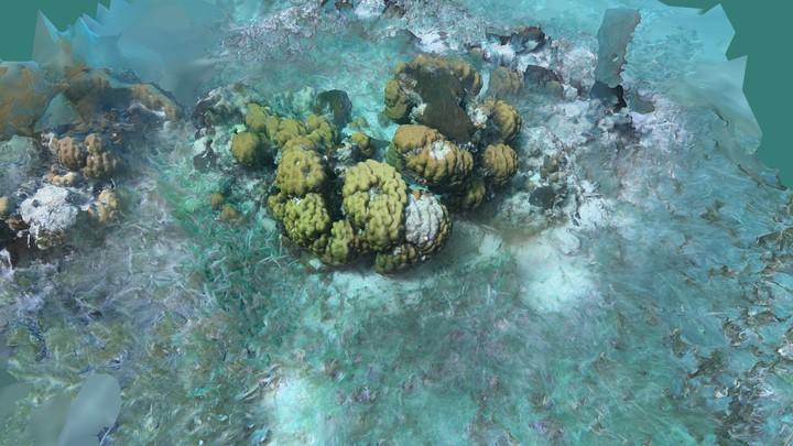 Underwater Tests - Gopro Belize 2019 CAMERA RIG